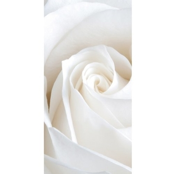 Picture of Ivory Bloom